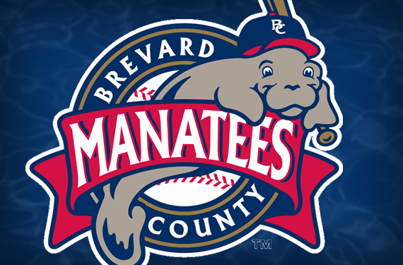 Holy Sea Cow! The Story Behind the Brevard County Manatees
