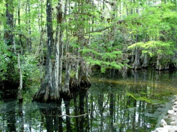 Everglades_Park_swamp