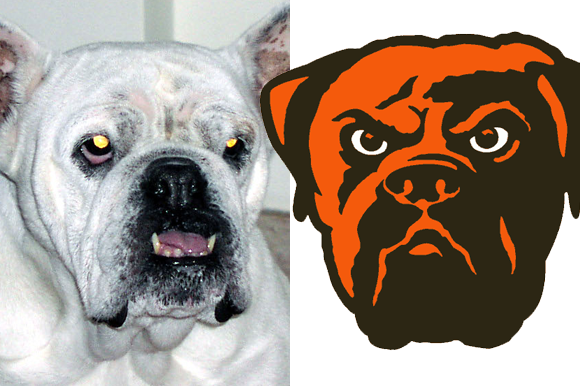 browns-dog-3