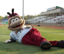 Savannah Sand Gnats Mascot