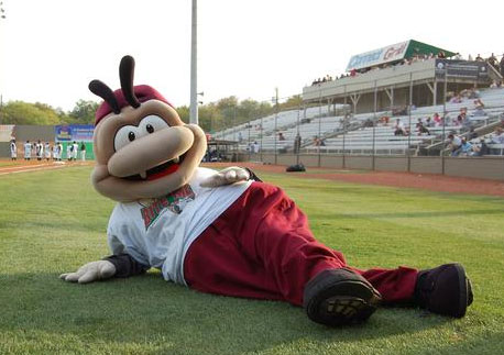 Sand Gnats Moving to Columbia for 2016