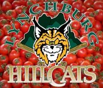 hillcats-tomatoes