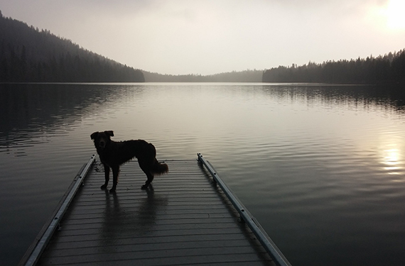 Lake Country DockHounds Announced as New American Association Team