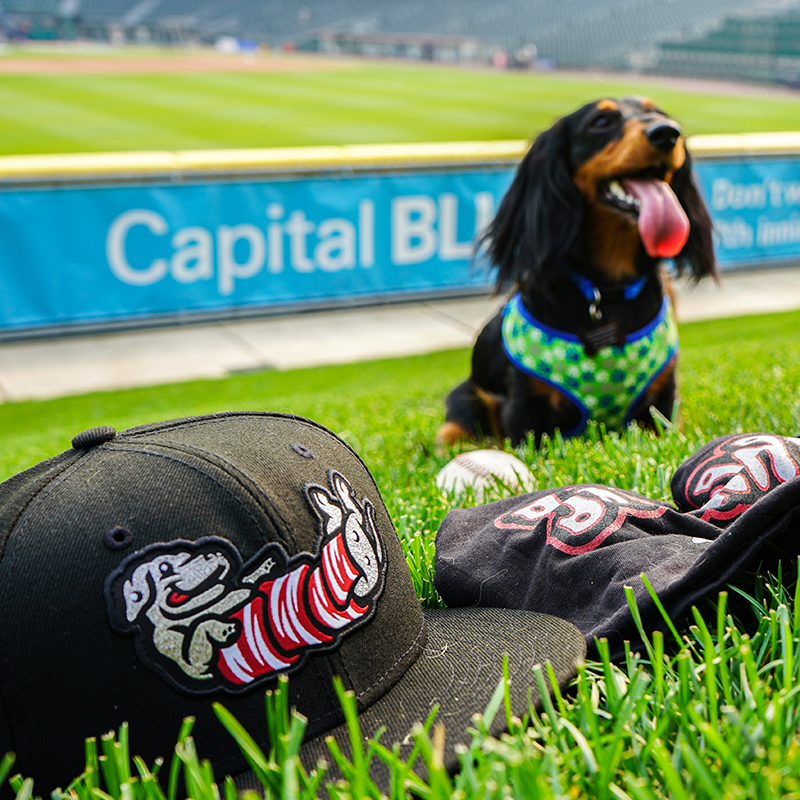 IronPigs to celebrate GM's love for wiener dogs as IronWieners